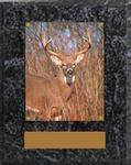 Wildlife Image Archery Plaque N Series