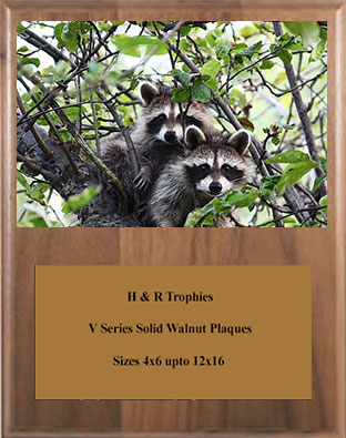 Solid Walnut Coon Plaque V Series