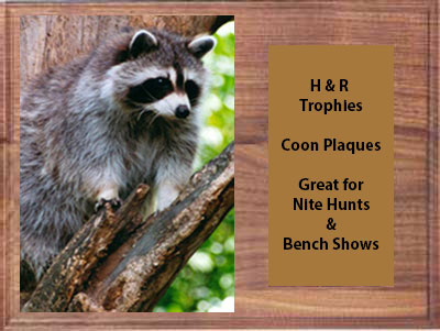 Solid Walnut Coon Plaque